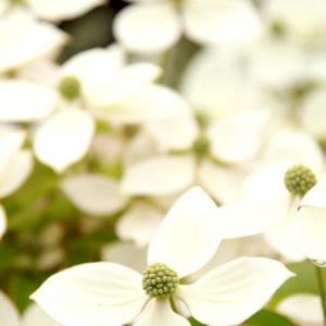 季節の花 満開