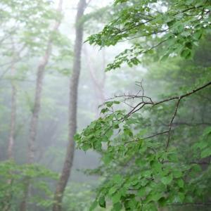 森林浴 日光霧降高原にて <3> 2020・06・21