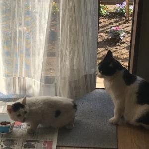 野良猫母娘との227日日記(後編)/COVID-19