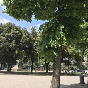検査しにフィレンツェを1時間散歩してみたよ/COVID-19