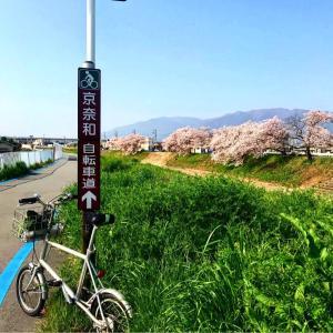 JR御所駅まで桜ポタ