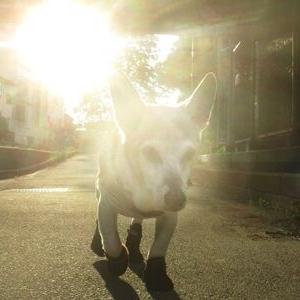 夏服の老犬