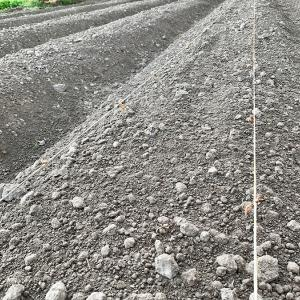 大豆の種播き第一弾