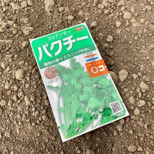 雨後の雑草退治と鮎の塩焼き