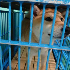 豊田市動物愛護センターの迷子さんたち、まだ帰れていません!!