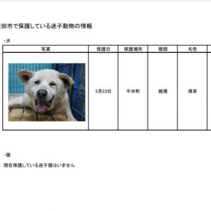 愛知県豊田市にて迷子収容!大型犬の男の仔!
