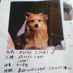 愛知県豊田市井上町にて迷子の犬を探しています!!