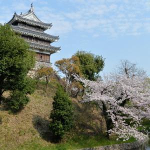 恒例西尾城桜🌸撮影