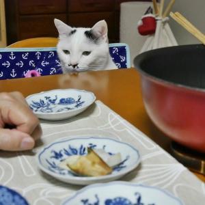 テーブルのぞきのるんこ(o´艸`o)