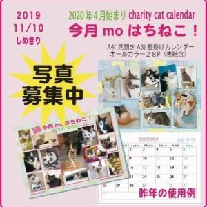 【番外】はち猫カレンダーの写真応募