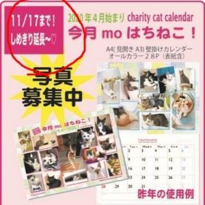 【番外】はち猫カレンダー締め切り延長のお知らせ