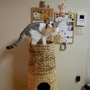 タワー「ネコタ」の上でドギマギたん吾