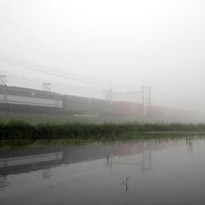 濃霧の朝(続)