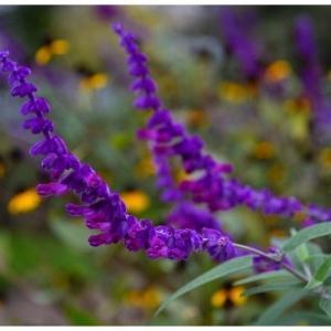 秋の紫な花