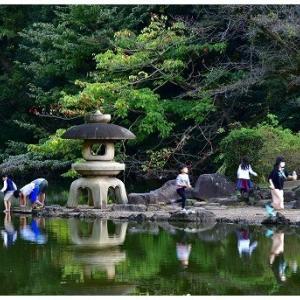 ザリガニ採りを楽しむ日本庭園