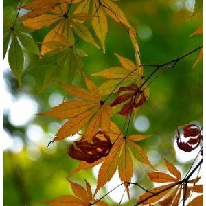 気候は穏やかな秋