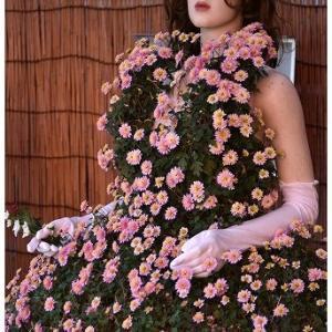 菊のドレス☆菊まつり