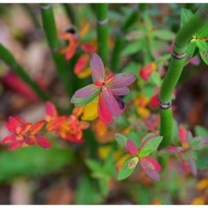 七色の紅葉