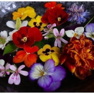 庭の花を摘んでみた