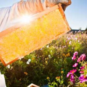 固まったハチミツを溶かす方法