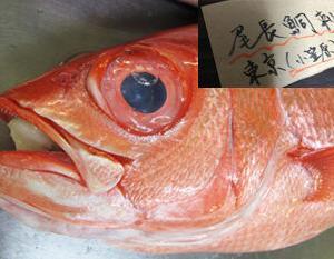 尾長鯛(東京)
