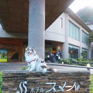 松阪わんわんパラダイスホテル