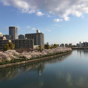 大阪城満開