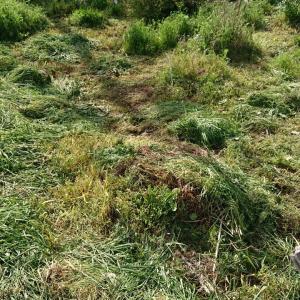 花畑の草刈り