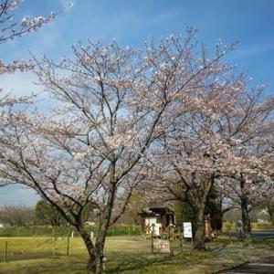★3/23(月) お花見散歩&お外でサンドイッチランチ  ★