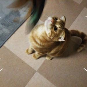 ★2/25(木) 愛猫のりたま🐈生後6ヵ月になりました ★