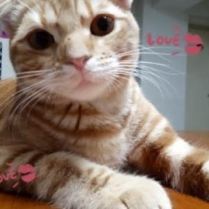 ★5/25(火) 愛猫のりたま🐈生後9ヵ月になりました ★