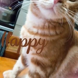 ★6/25(金) 愛猫のりたま🐈生後10ヵ月になりました ★
