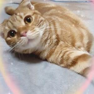 ★7/25(日) 愛猫のりたま🐈生後11ヵ月になりました ★