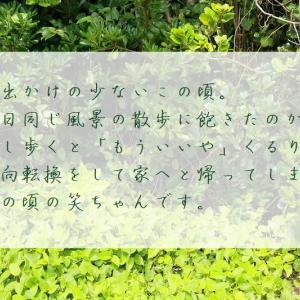 野島崎。①