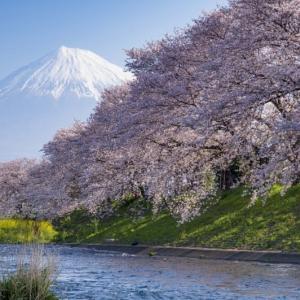 2020 龍巖渕の桜