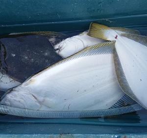 10月6日ヒラメ 小樽遊漁船シェイク