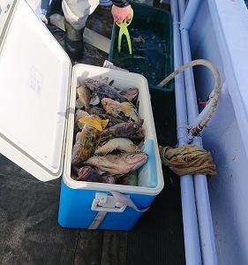 1月18日ソイ、ガヤ 小樽遊漁船シェイク