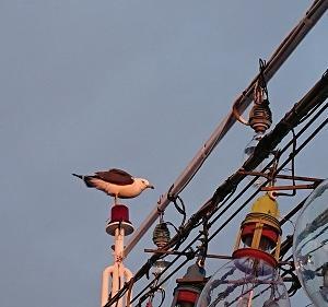 5月26日ヒラメ 小樽遊漁船シェイク