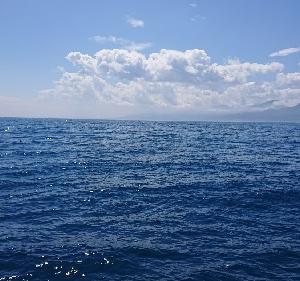 6月5日ヒラメ 小樽釣り船シェイク