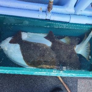 9月20日ヒラメ 小樽遊漁船シェイク