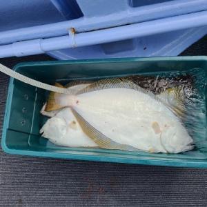 9月21日ヒラメ 小樽遊漁船シェイク