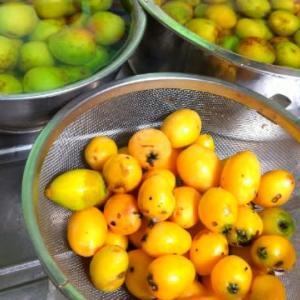 梅と枇杷の収穫