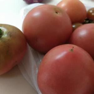 雨が嫌いなトマト