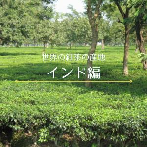 【連載】世界の紅茶の産地~インド編~:中日新聞Web