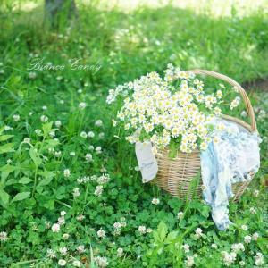 春に飾りたい♡可愛いマトリカリア♪ざっくりピッチャー活けがオススメ!