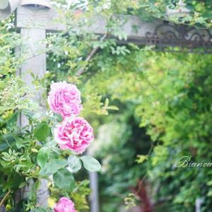 ガーデンショップLucy Grayさんへ♪ベランダガーデンの植物を調達♡