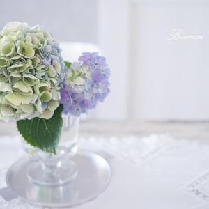 【YouTubeでワンポイント花レッスン】紫陽花の水あげ方法♪~花のある暮らしのレシピ~