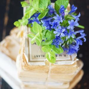 梅雨から夏にかけて旬の花♪アガパンサス!花活けのポイント♡