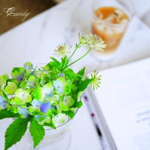 今が旬!紫陽花の季節到来~♪基本の水あげ&飾り方アイデア