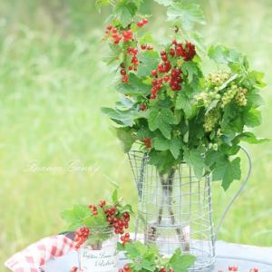 旬を楽しもう♡可愛い枝もの♪フサスグリの赤い実!